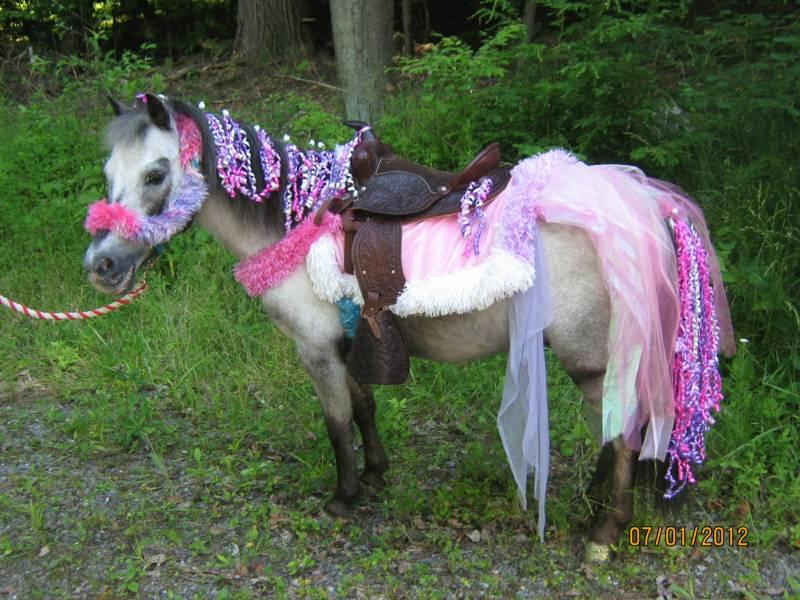 pony-jpg